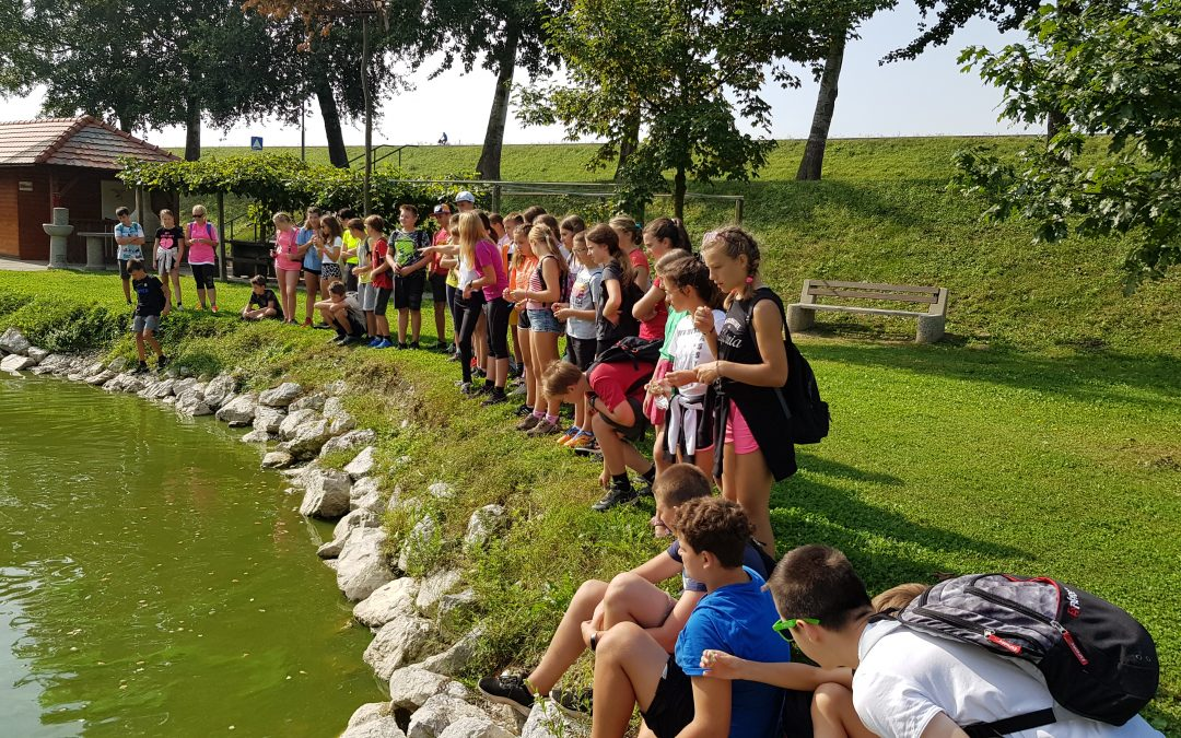 3. dan – pohod ob Ptujskem jezeru